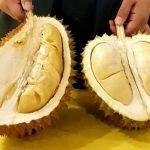 Datang Ke Medan Jangan Lupa Nikmati Lezatnya  Ucok Durian